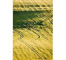 Evening barley Photographic Print
