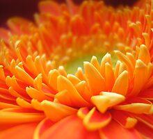 Summer Joy by Lorraine Creagh