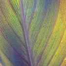 Purple Canna Leaf by StaceyH