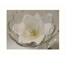 A white beauty with frill Art Print