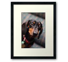 Frankie Sausage Framed Print