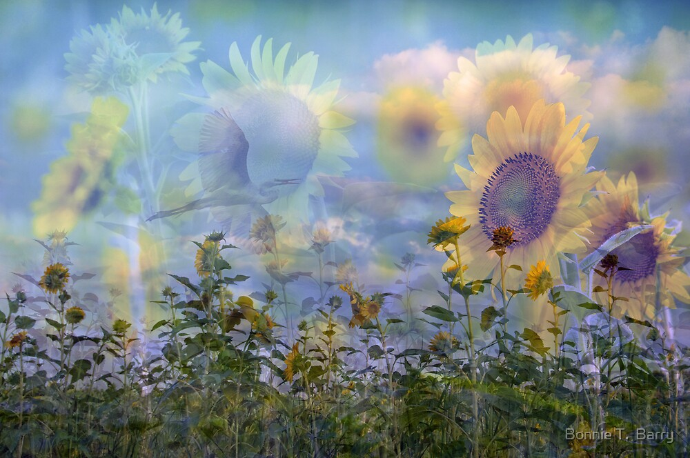 Sunflower Symphony by Bonnie T.  Barry