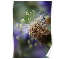 Little dancers  (from wild flowers collection) Poster