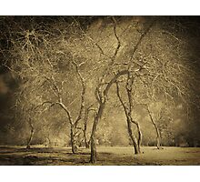 Trees in WInter Photographic Print