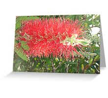 Red, Green & Aussie Greeting Card