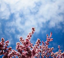 Cherry Blossom reaching for the sky by brendontjg