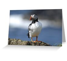 Puffin! Greeting Card