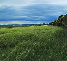 Kentstone Hedgerow by WatscapePhoto