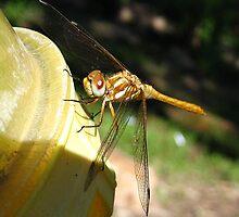 Golden Dragonfly by Bellavista2