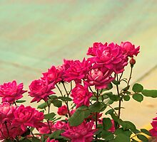 Roses Galor by Rick  Friedle
