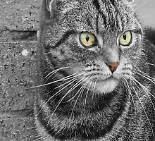 Tabby Cat by simpsonvisuals