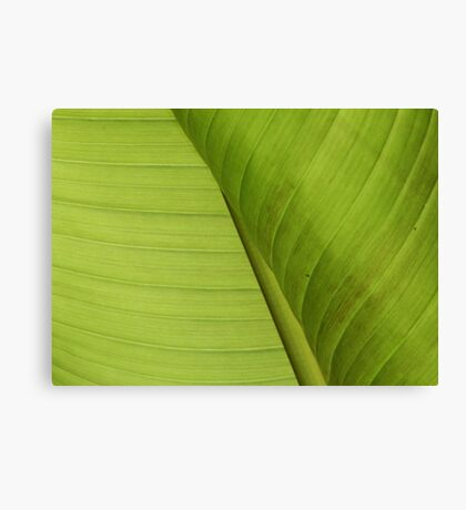 Natural texture of a banana leaf Canvas Print