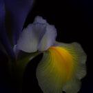 Iris whispers by EbyArts