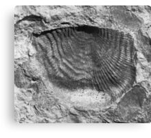 Leptaenid brachiopod fossil from Usk, Monmouthshire Canvas Print