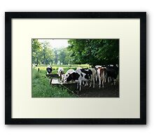 Drinking cows Framed Print