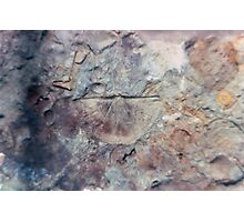 Brachiopod fossil from Usk, Monmouthshire Photographic Print