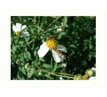Ailanthus Web Moth Art Print