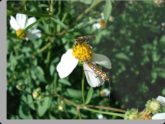 Ailanthus Web Moth by May Lattanzio