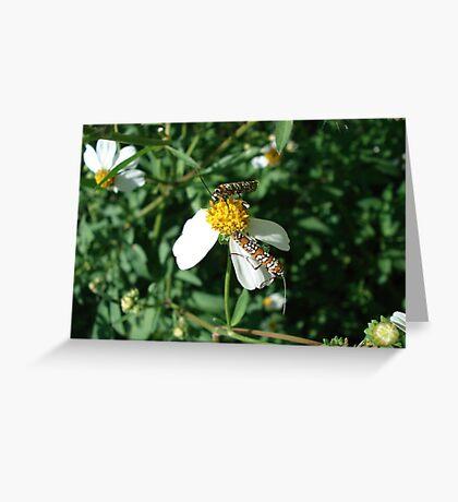 Ailanthus Web Moth Greeting Card