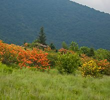 Flame Azaleas and Mountains by Jane Best