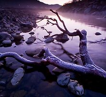 Lilac Frost by Ken Wright