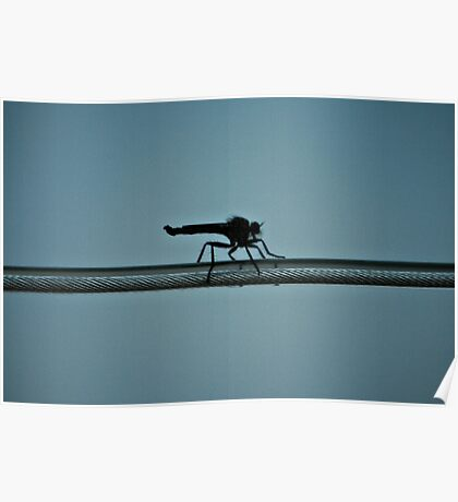 Walking On Wire Poster