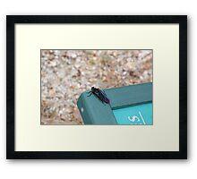 Mystery Bug Framed Print