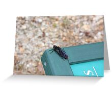 Mystery Bug Greeting Card