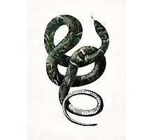 Jungle Snake Photographic Print