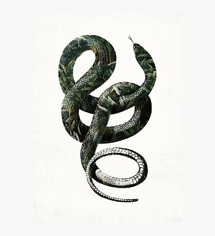 Jungle Snake Photographic Print