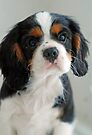 Adorable Louie by Renee Hubbard Fine Art Photography