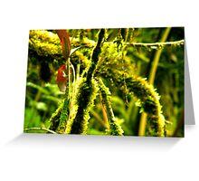 Moss Invasion! Greeting Card