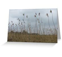 Feathering the sky Greeting Card
