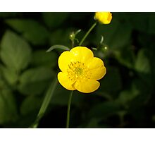 Butter Cup Photographic Print