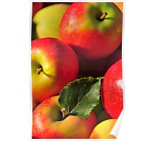 Apples straight from the tree Poster