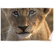 Sparta Lion Cub Poster