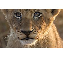 Sparta Lion Cub Photographic Print