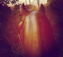 Horsehead Nebulous by philosophoto