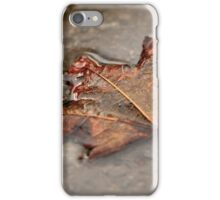 Maple Leaf in Puddle iPhone Case/Skin