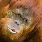 Sumatran Kiss by Daniel Attema