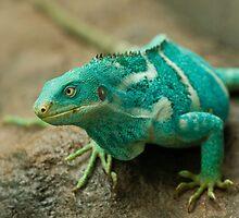 Fijian Crested Iguana by Daniel Attema