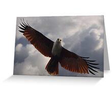 Brahminy Kite - Soaring Greeting Card