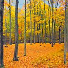 Fall Foliage by Arvind Balaraman