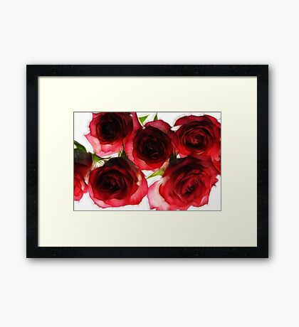 Pink and Red Roses on White Framed Print