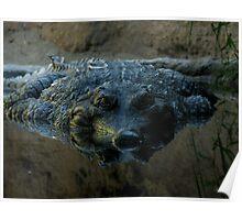 Crocodile Close Up Poster