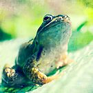 Ribbit by Claire Penn