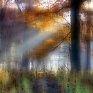 Foggy Morn' in the Forest by Brian Gaynor