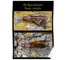 The Pigeon Horntail - Wood Wasp Poster