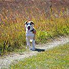Maisy on the Prairie by Brian Gaynor