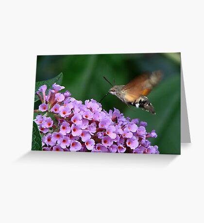 Humming Bird Hawk Moth 1 Greeting Card